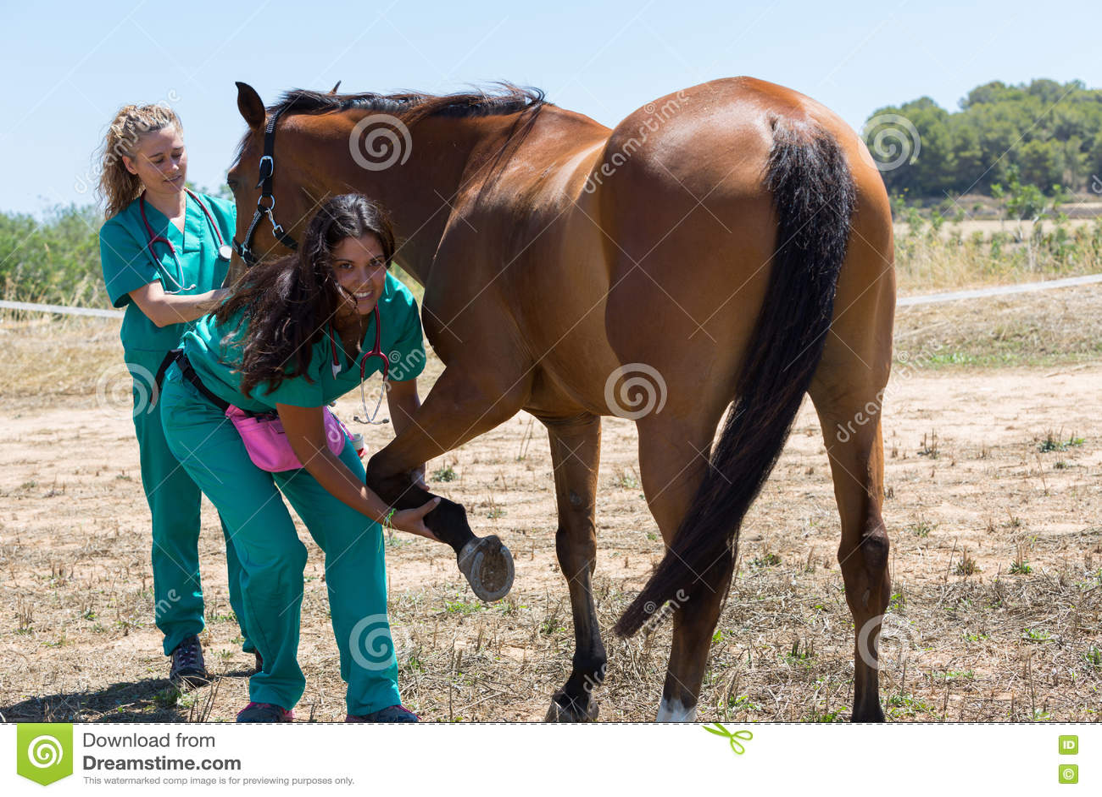 Veterinaire paarden op het landbouwbedrijf