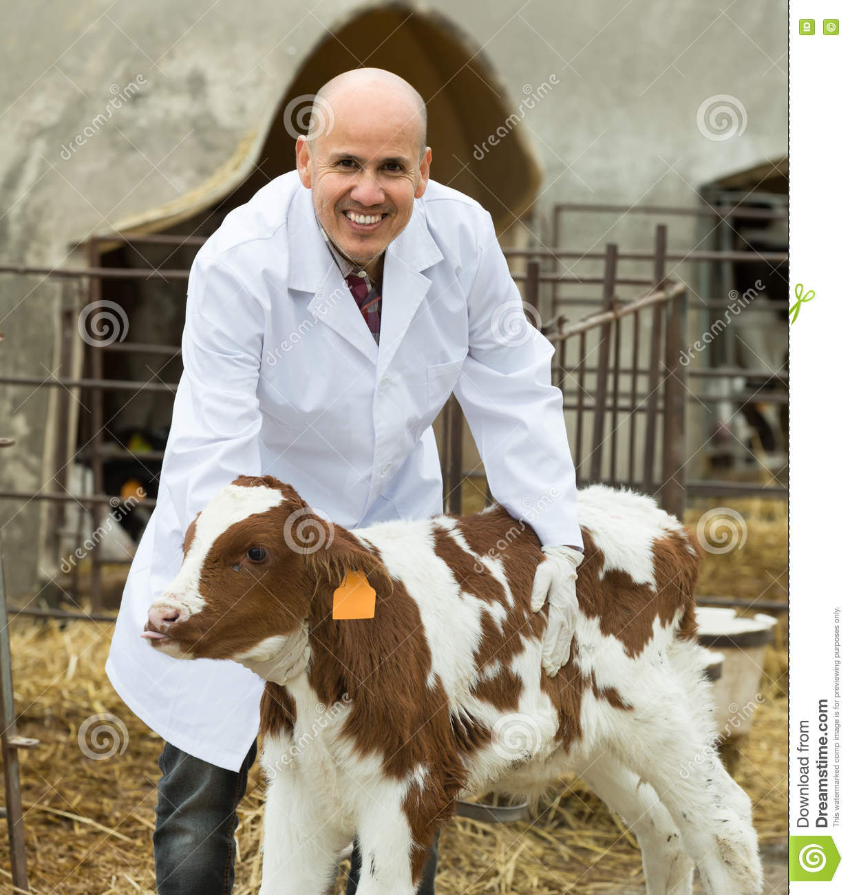 how to become a livestock veterinarian