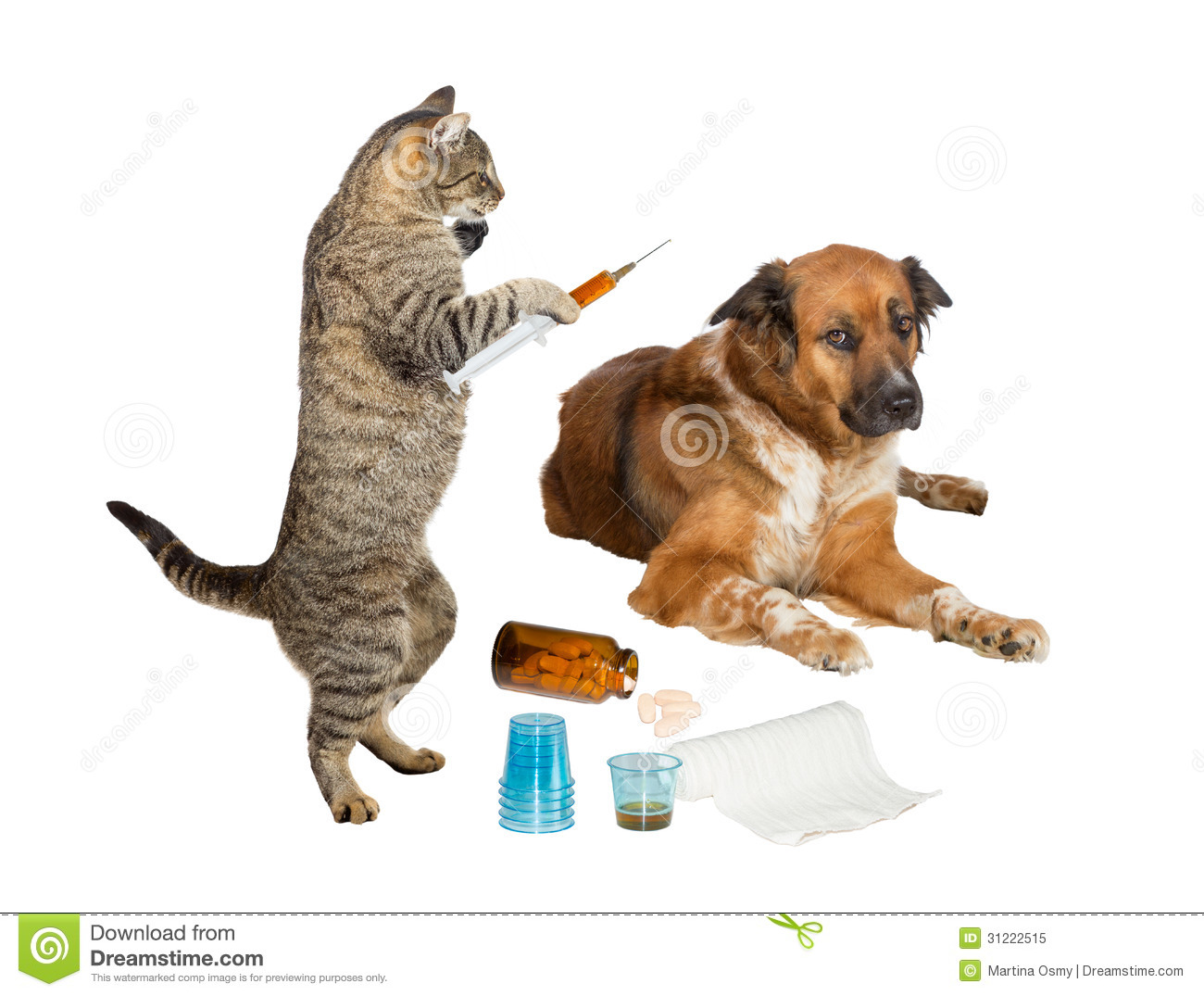 Veterinarian cat treating sick dog on white stock image Can a dog tell if another dog is sick