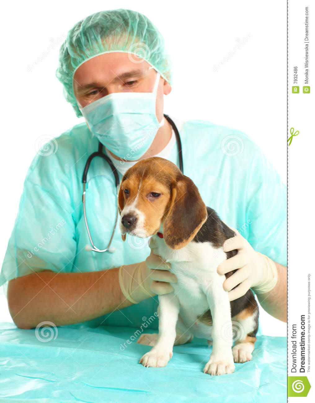 Veterinarian Doctor And A Beagle Puppy Royalty Free Stock