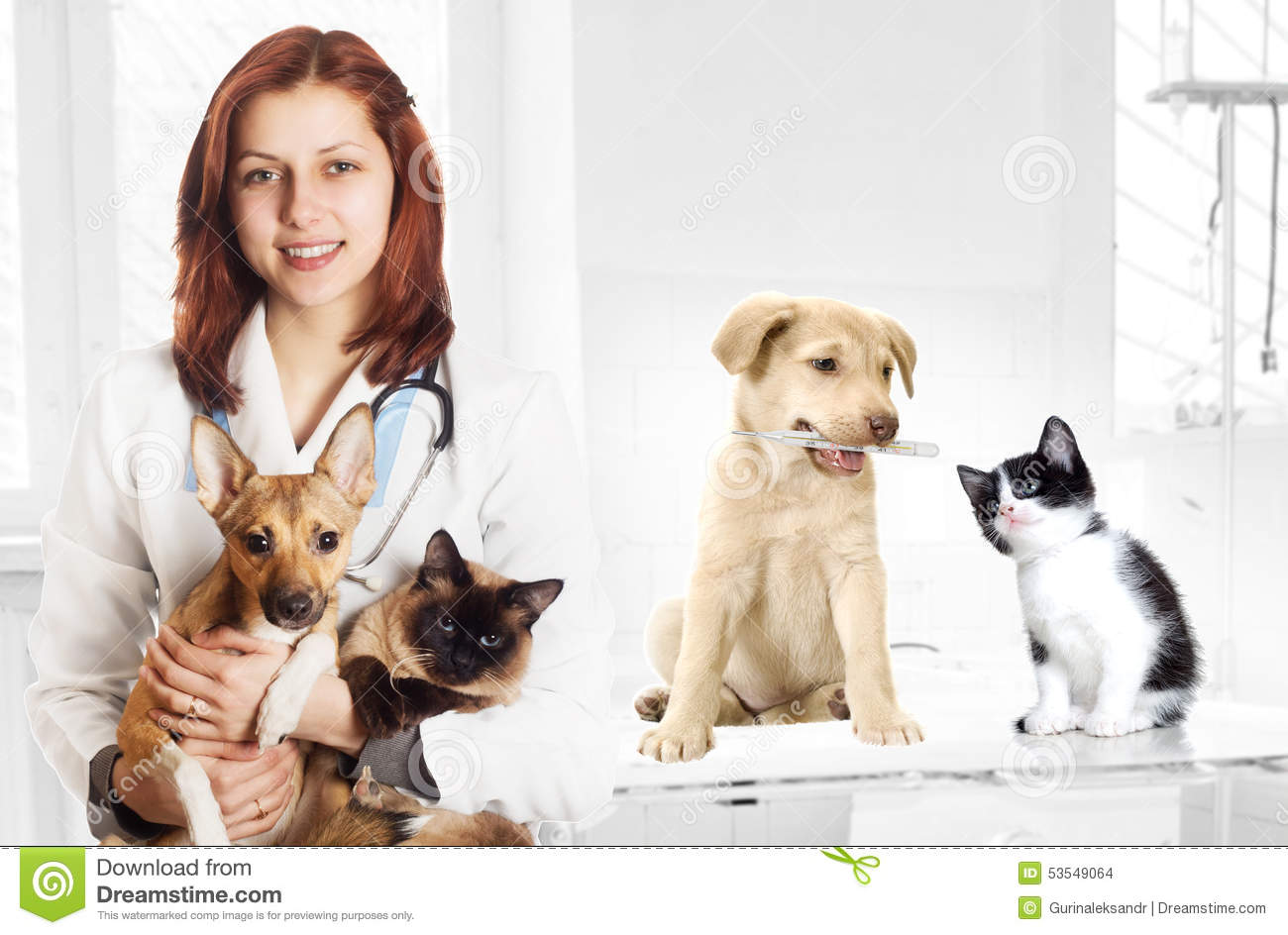 cat and dog clinic