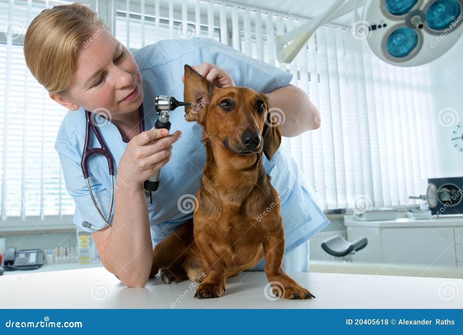 Making A Dog Pedigree