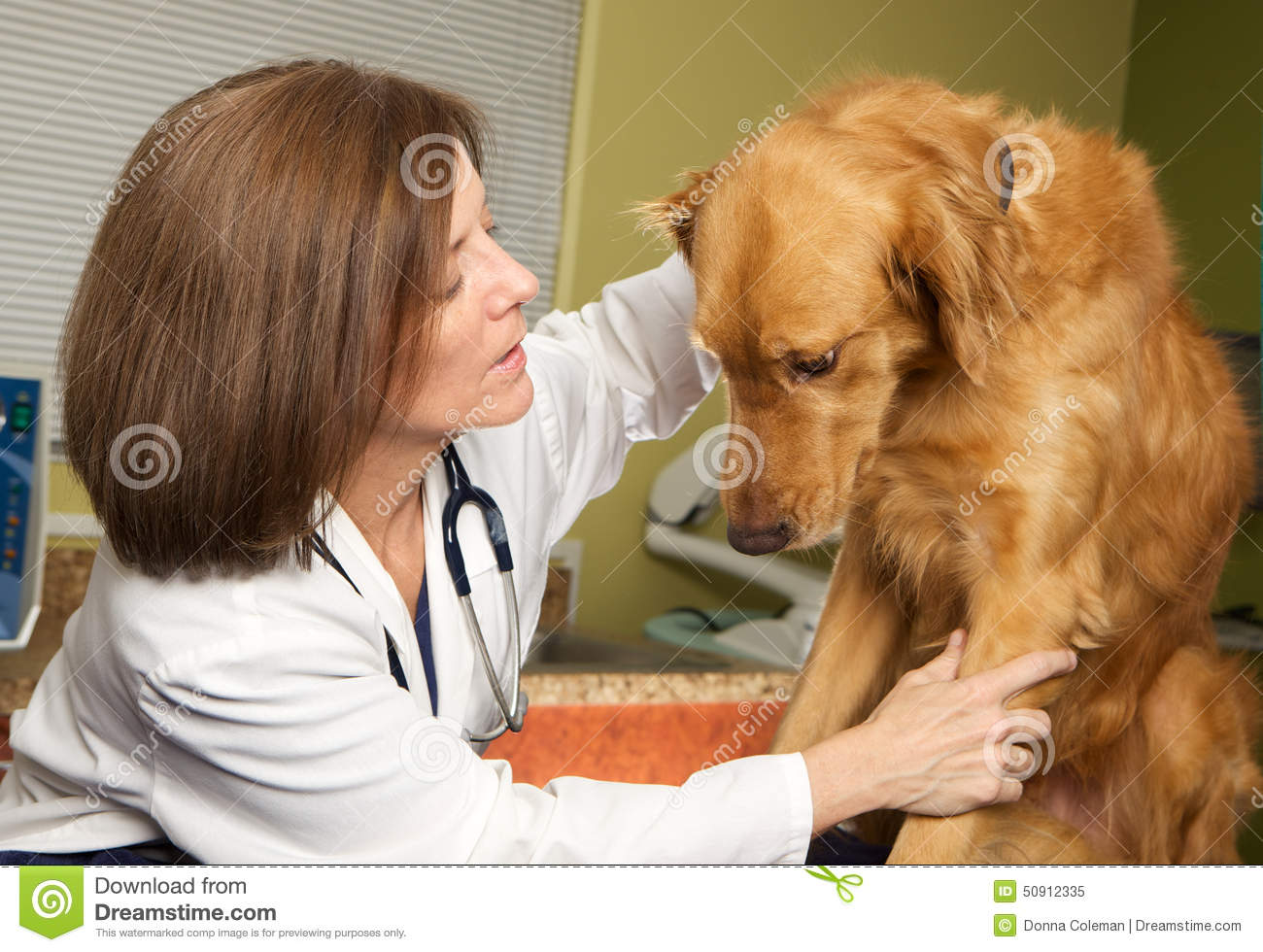 A Veterinarian Examining a Nervous and Scared Dog
