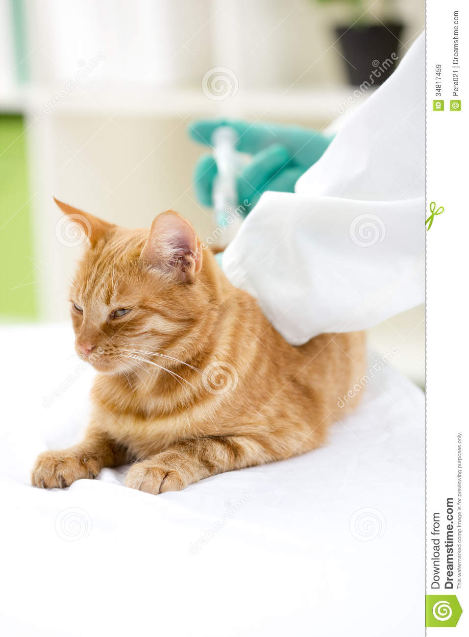 how to give a cat insulin injection