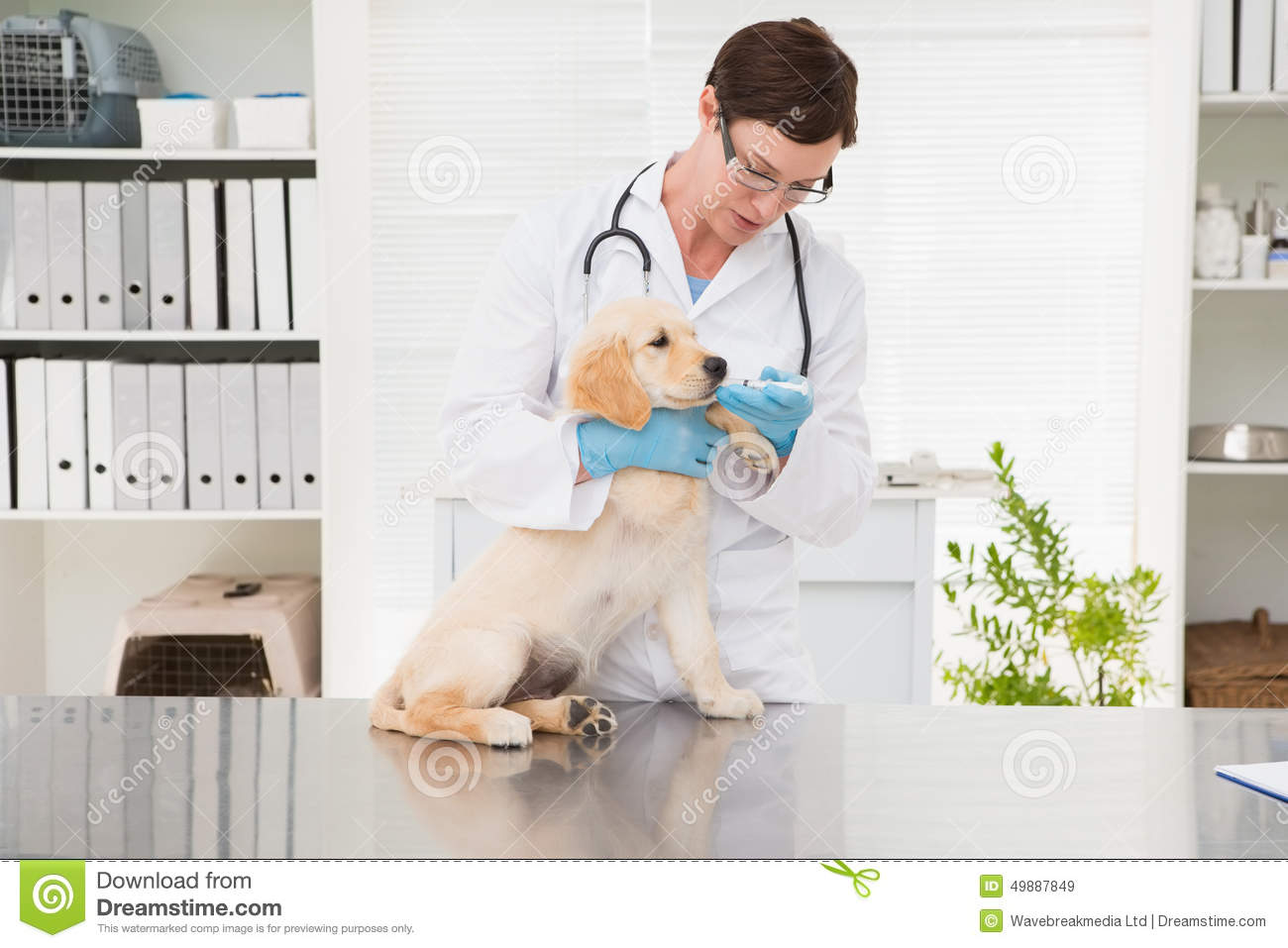 how to give adequan injection to dog