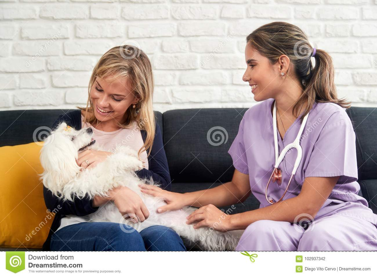 Veterinarian House Call With Doctor Dog Owner And Animal Stock Photo