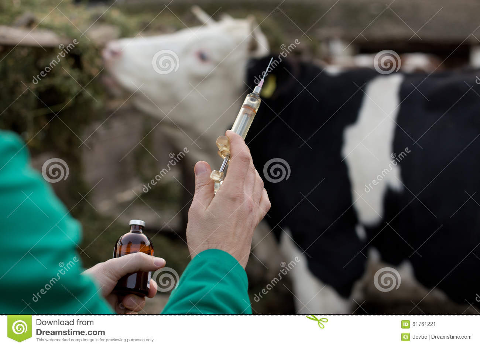 Veterinarian with syringe on farm