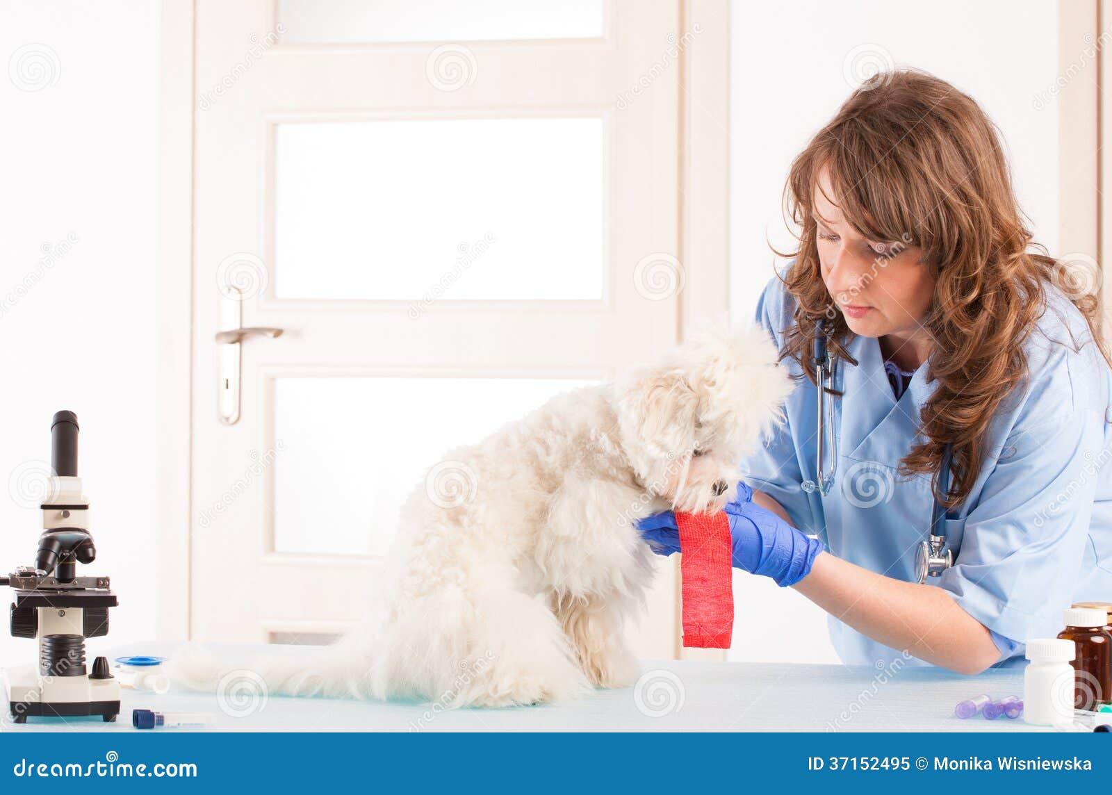 Veterinario de la mujer con un perro