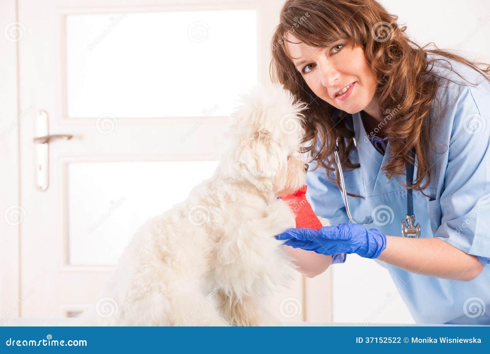Veterinario della donna con un cane
