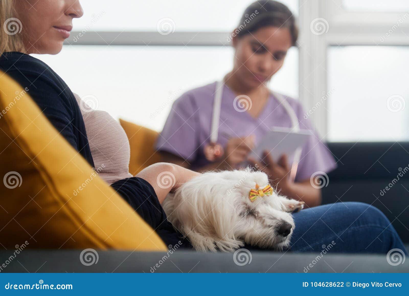Veterinario joven que habla con el dueño del perro durante la visita casera