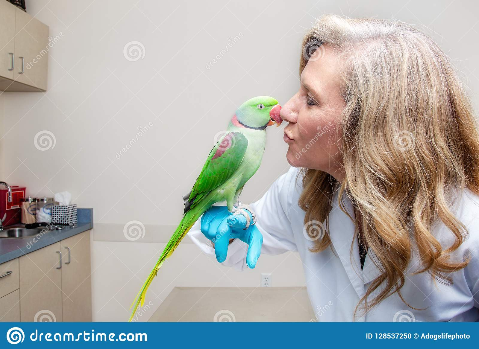 Veterinario Kissing Bird en sitio del examen