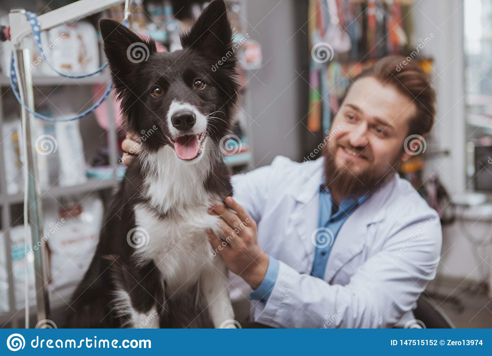 Veterinario maschio barbuto allegro che esamina bello cane