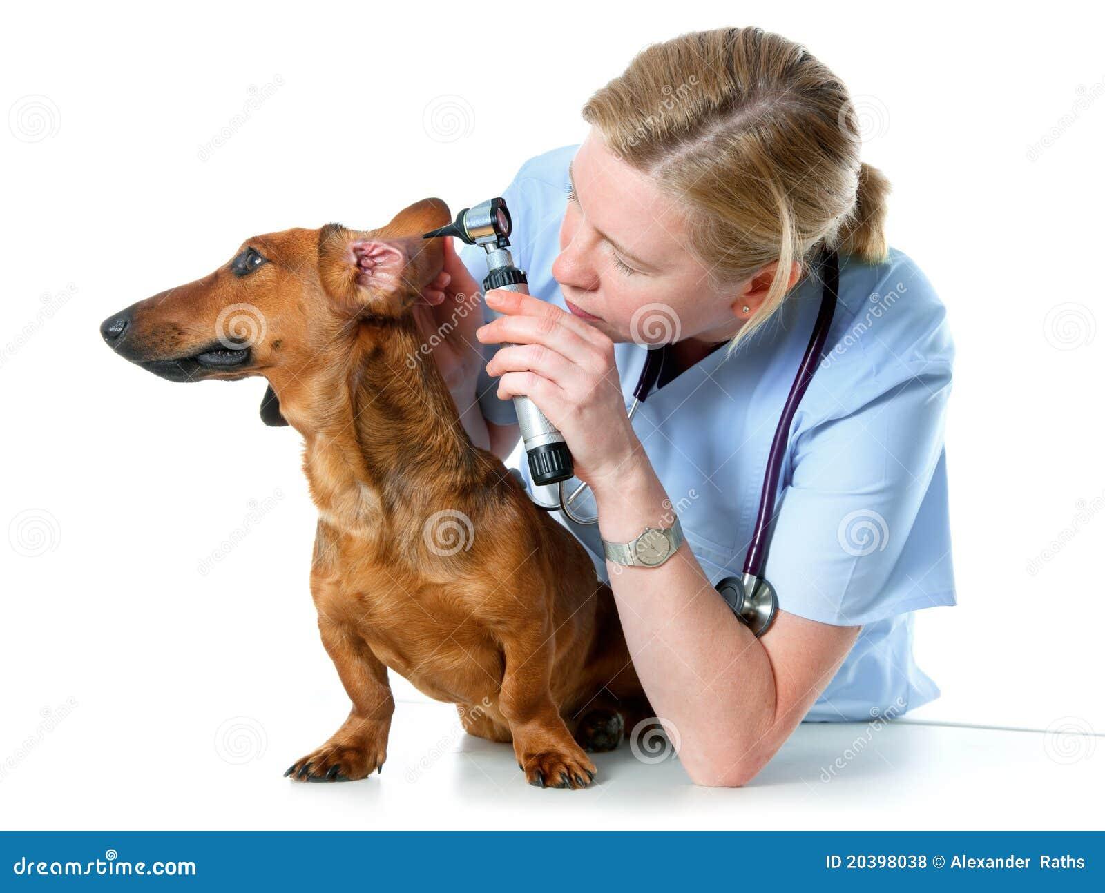 Veterinario que examina un perro