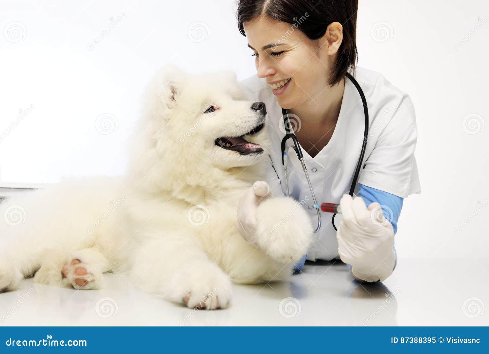 Veterinario sorridente con il cane nella clinica del veterinario