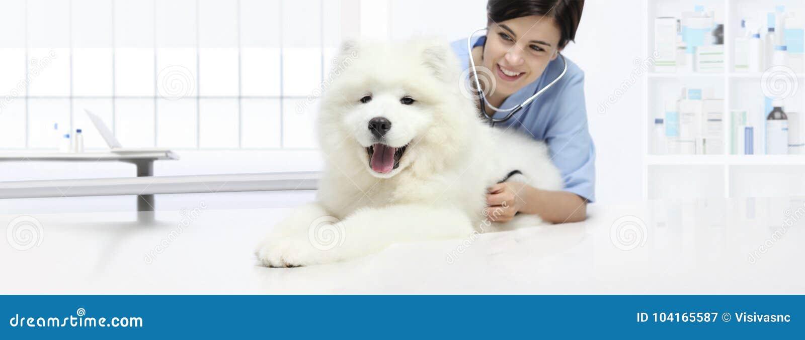 Veterinario sorridente dell esame veterinario del cane con lo stetoscopio