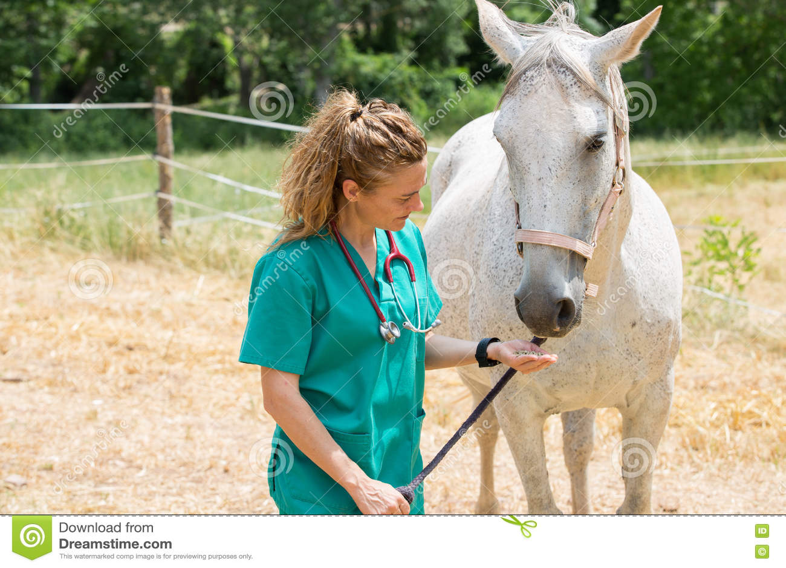 Veterinary на ферме