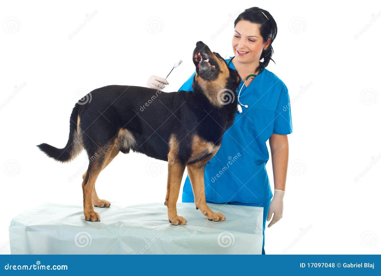 Veterinary собаки шаловливый