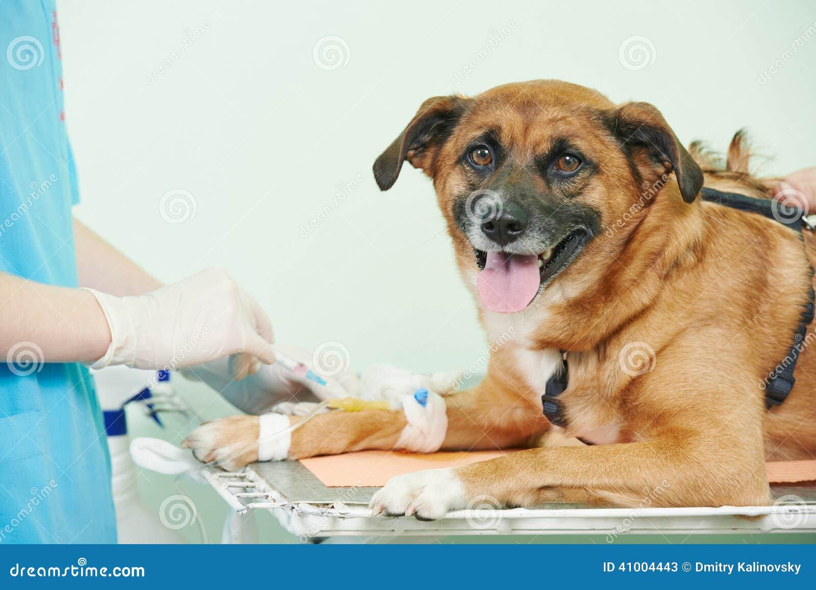 Dog Breed Test At Vet