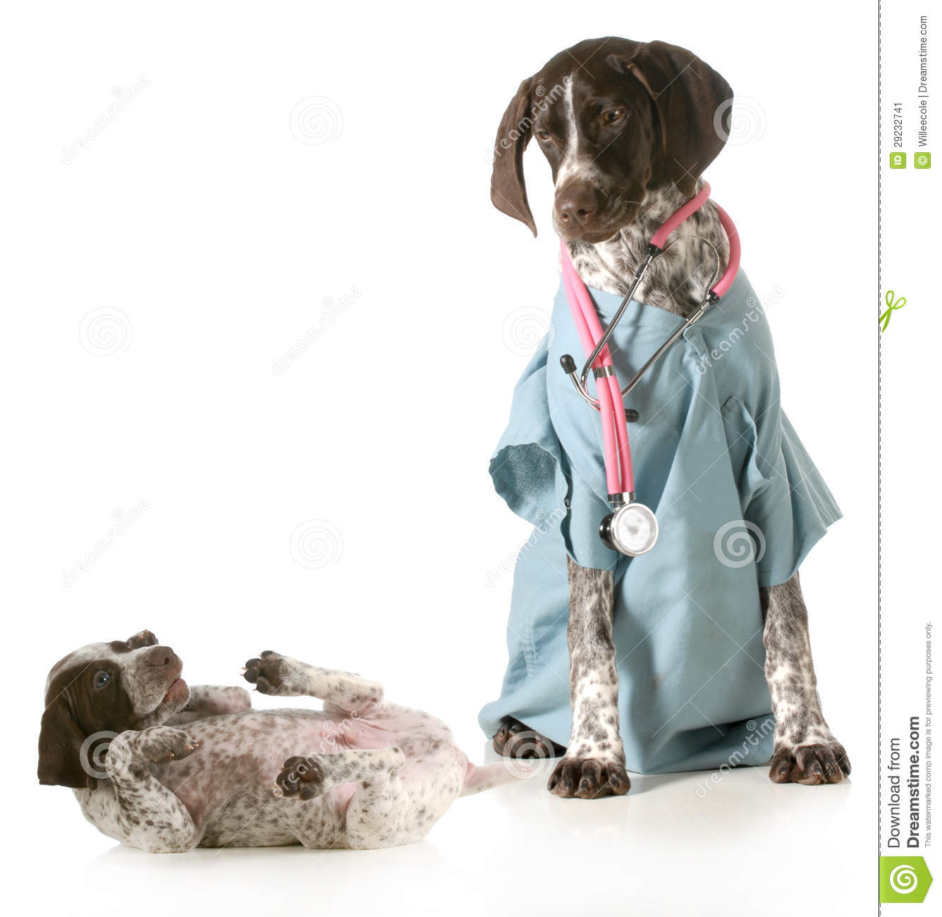 Veterinary Care Stock Image Image 29232741