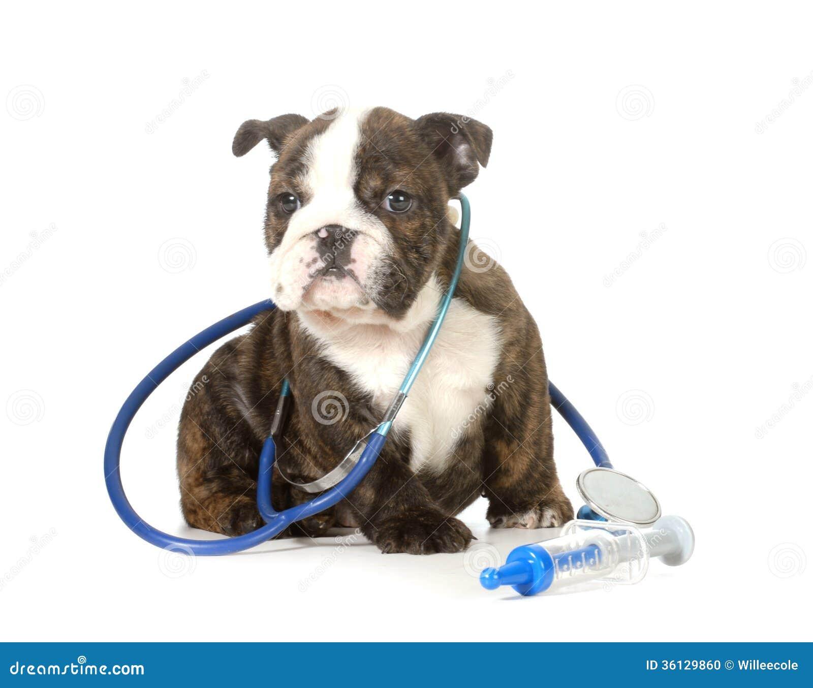 Veterinary Care Stock Photo Image Of Funny Care Friend 36129860