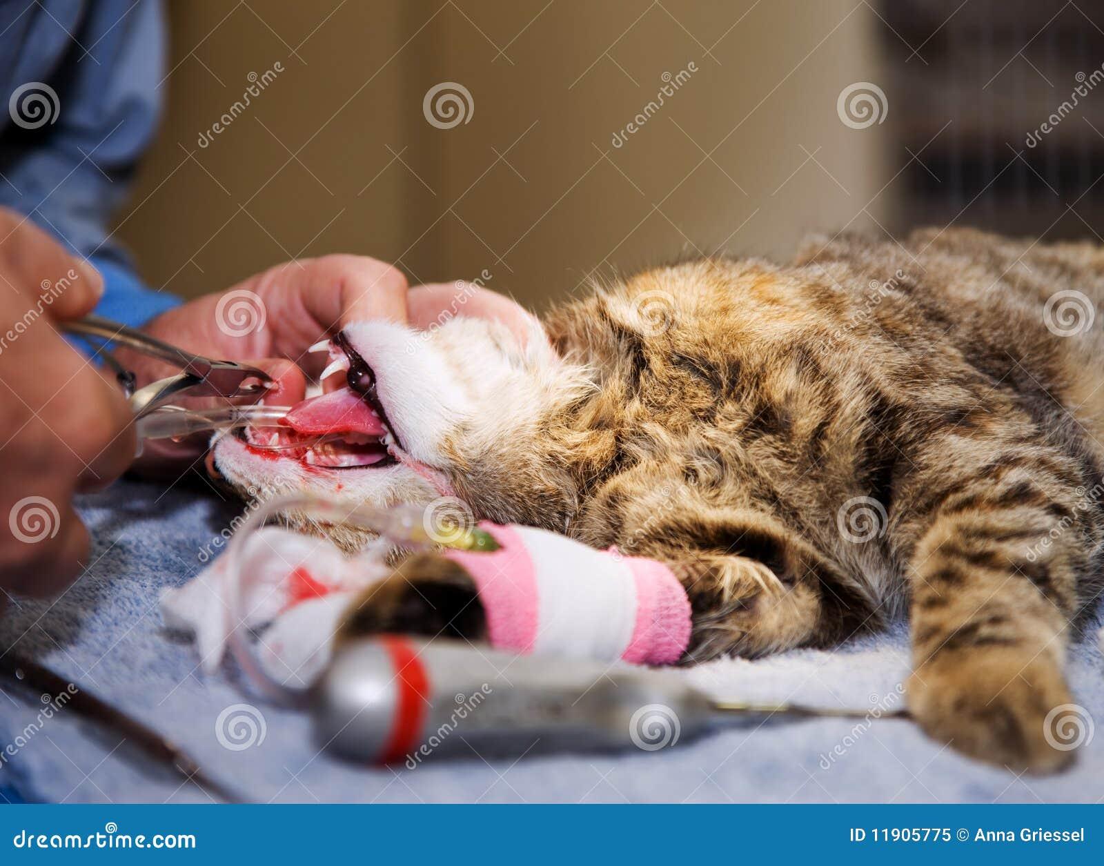 магазинов кот вырвал коготь с мясом что делать для производства разовых