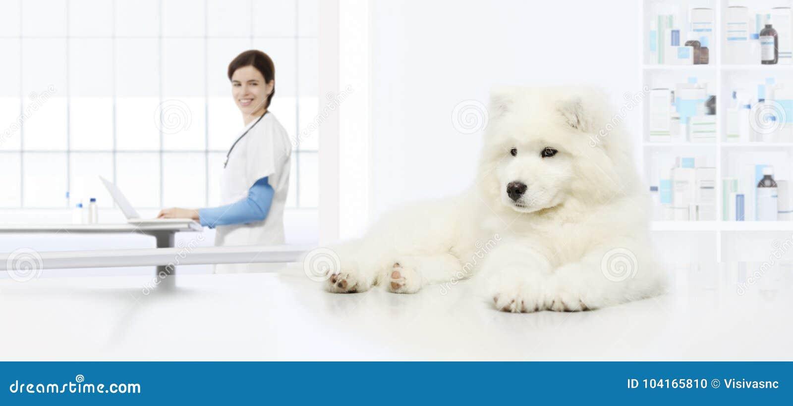 Veterinary examination dog, veterinarian with computer on table