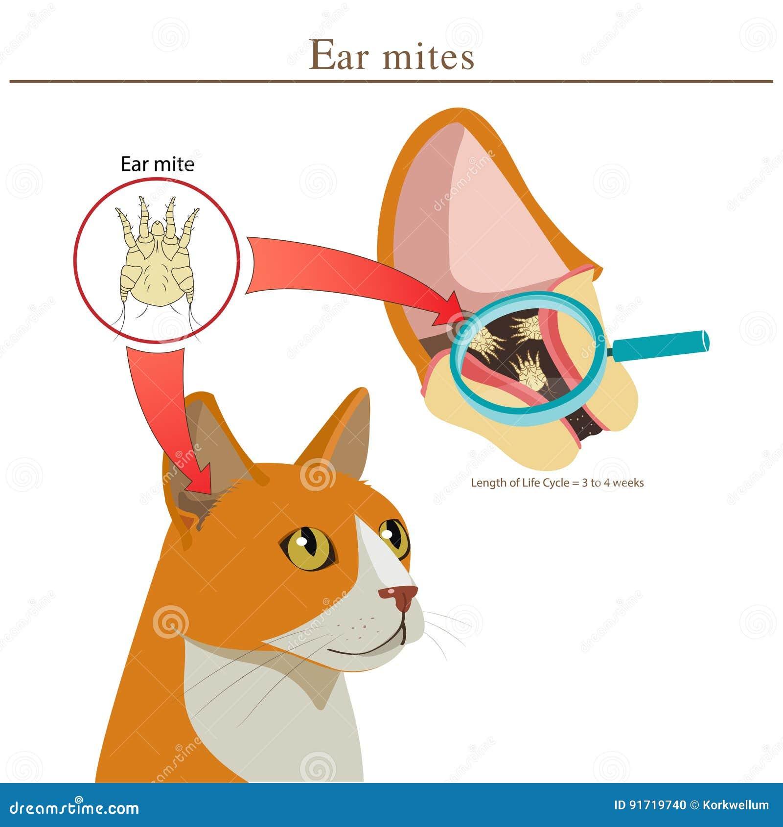 Veterinary Medicine  Cat Ear Mites Vector Illustration  Ear