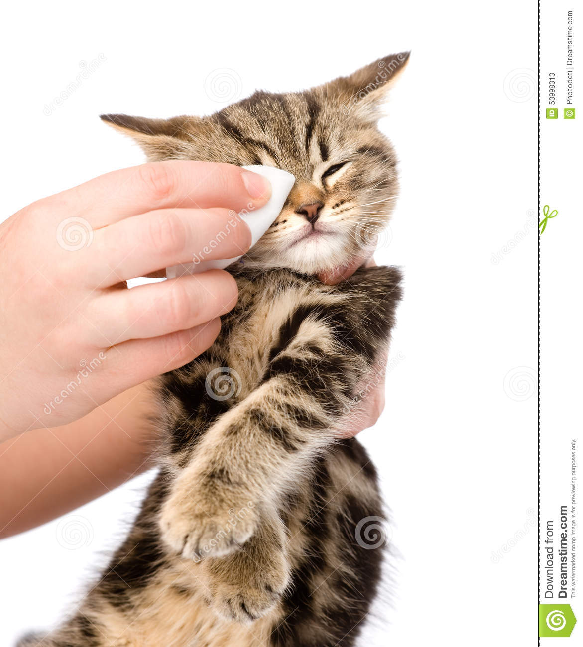 veterinary surgeon wipes to a cat isolated on white