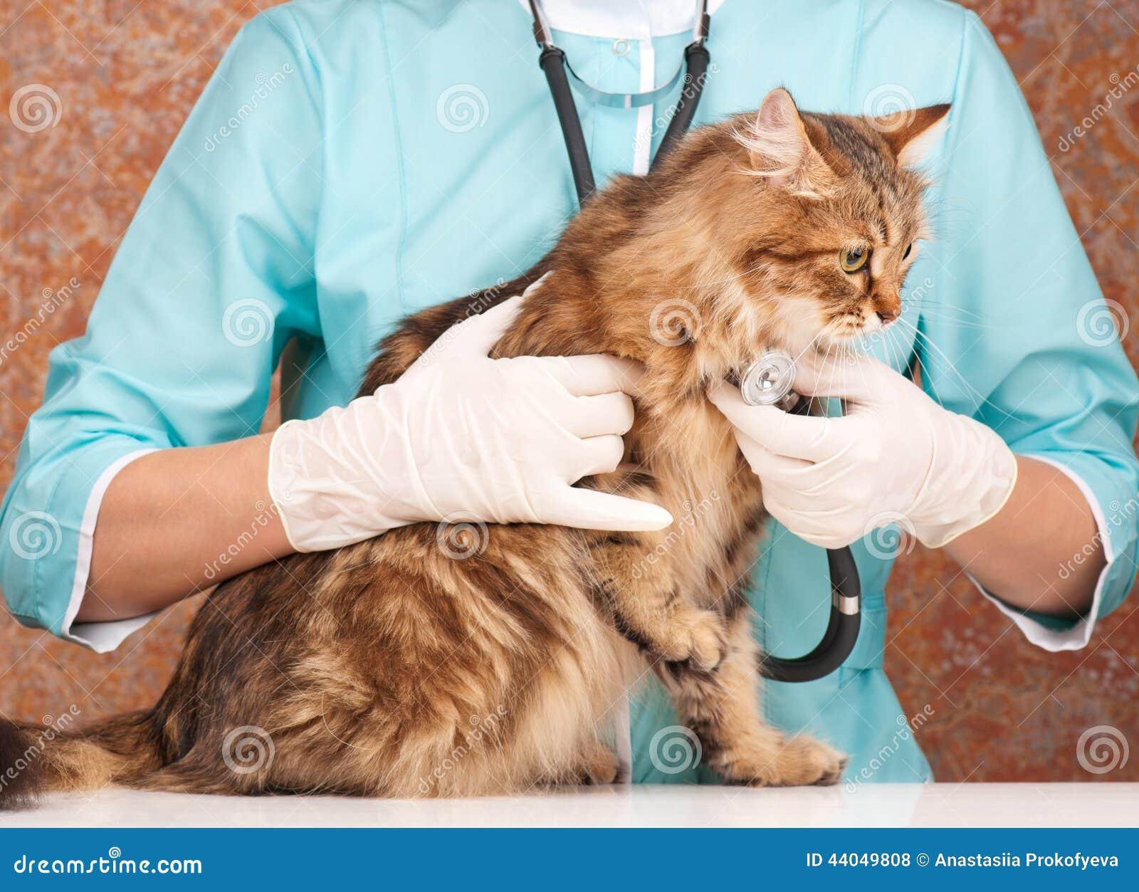 Veterinary survey