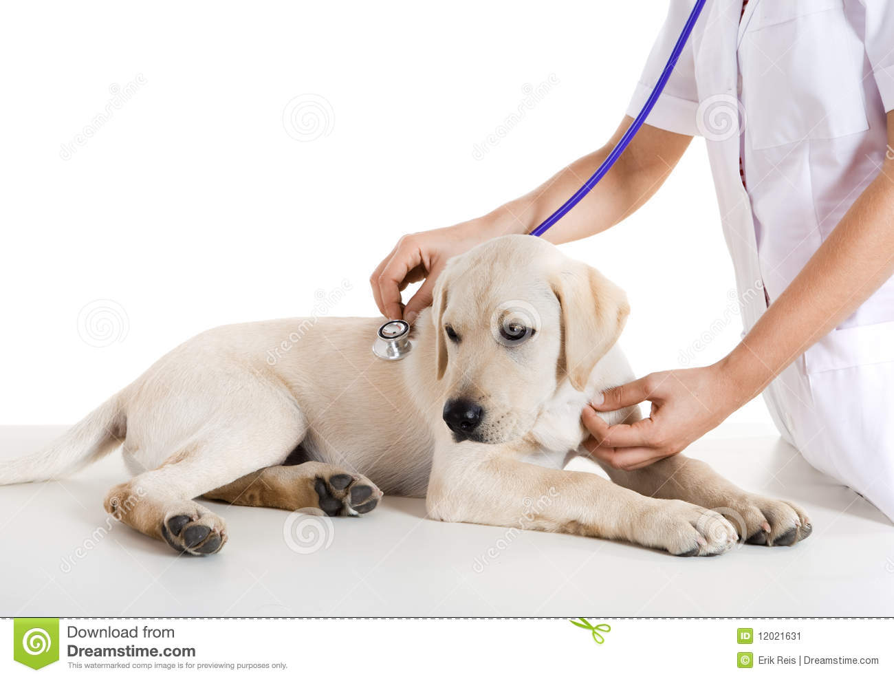 taking care of a puppy How to take care of puppies learn all about puppy basic care, its vaccinations and veterinary care, feeding and potty training puppies, obedience and socialization and more useful tips.
