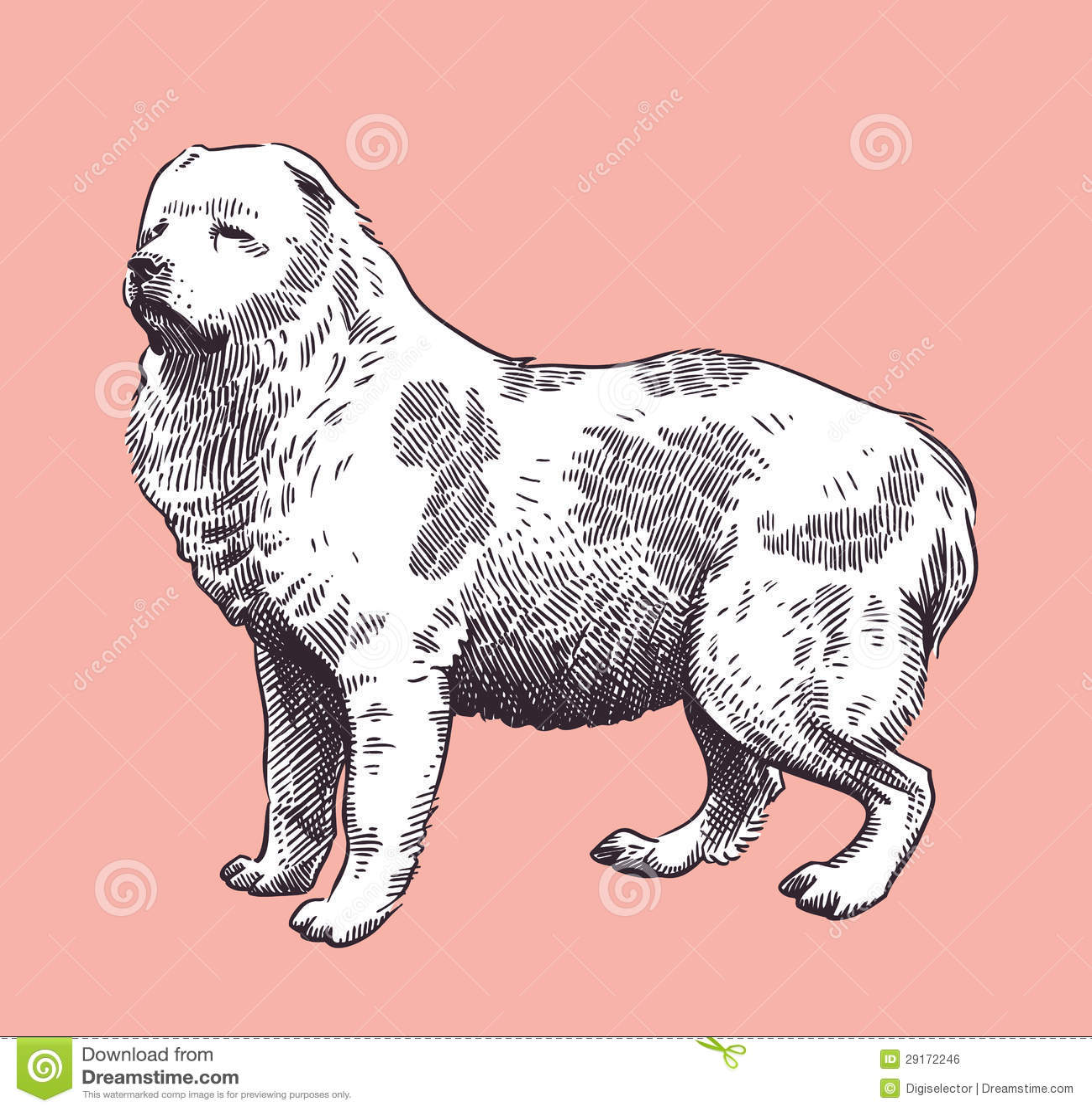 Vetor caucasiano do Meados de-Asiático do pastor do cão