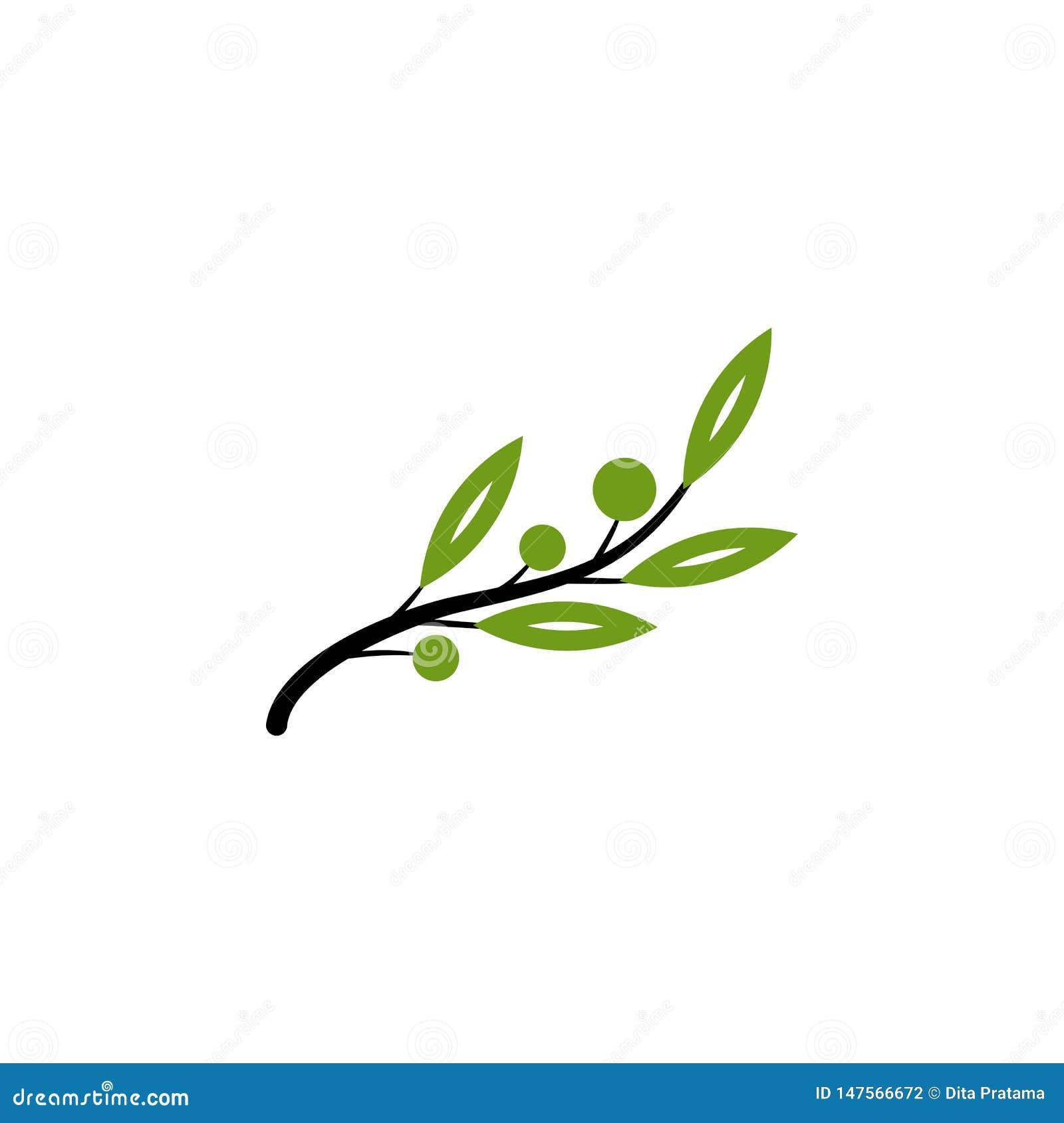 Vetor natural verde da oliveira