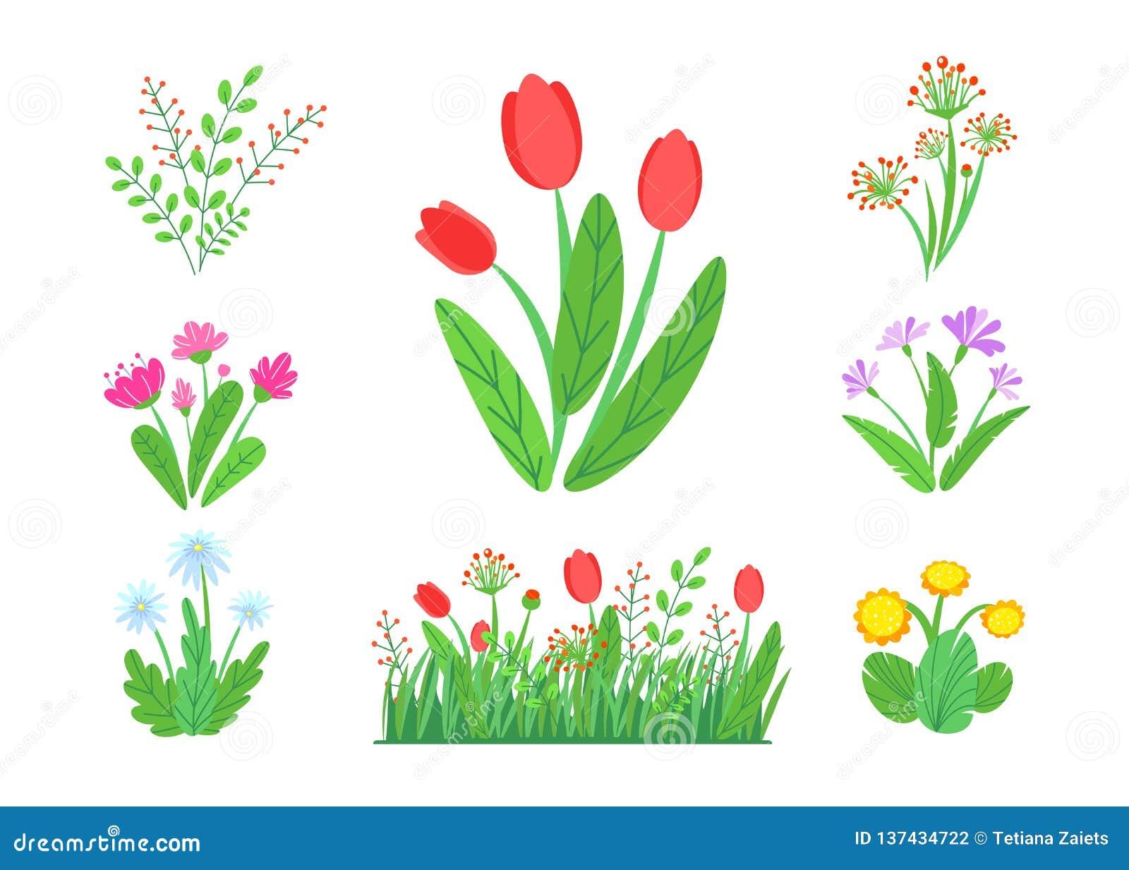 Vettore dei fiori del giardino della primavera con il confine di fioritura dell erba Illustrazione semplice del mazzo della piant