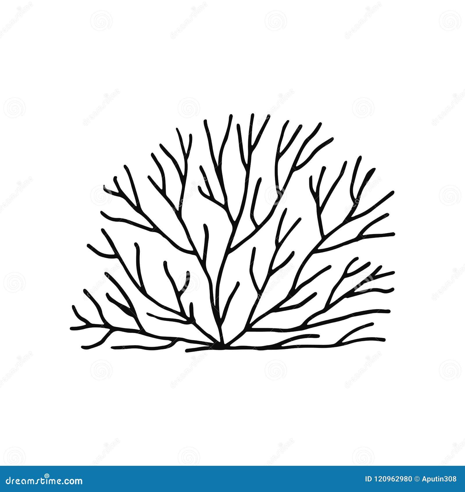 Vettore Del Disegno Della Mano Delle Alghe Isolato Piante Marine
