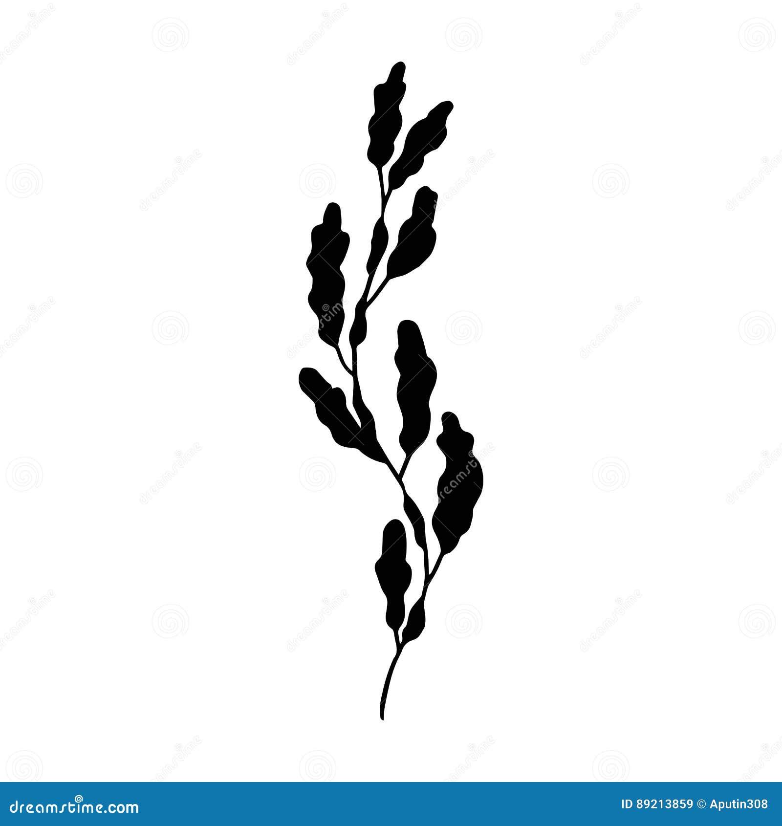 Vettore dell alga