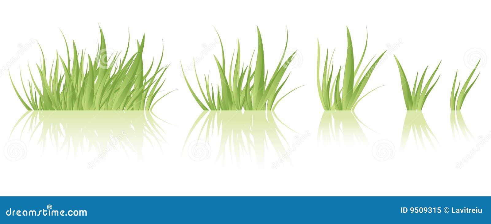 Vettore dell erba verde