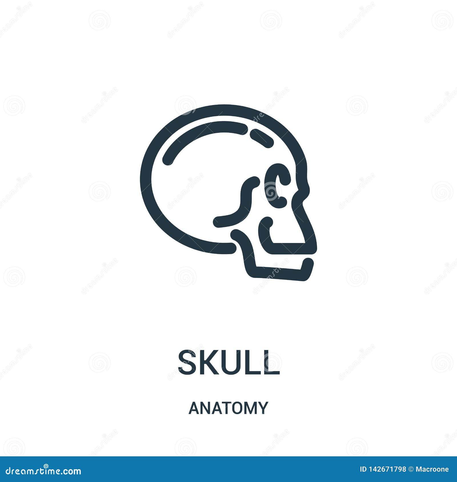 Vettore dell icona del cranio dalla raccolta di anatomia Linea sottile illustrazione di vettore dell icona del profilo del cranio