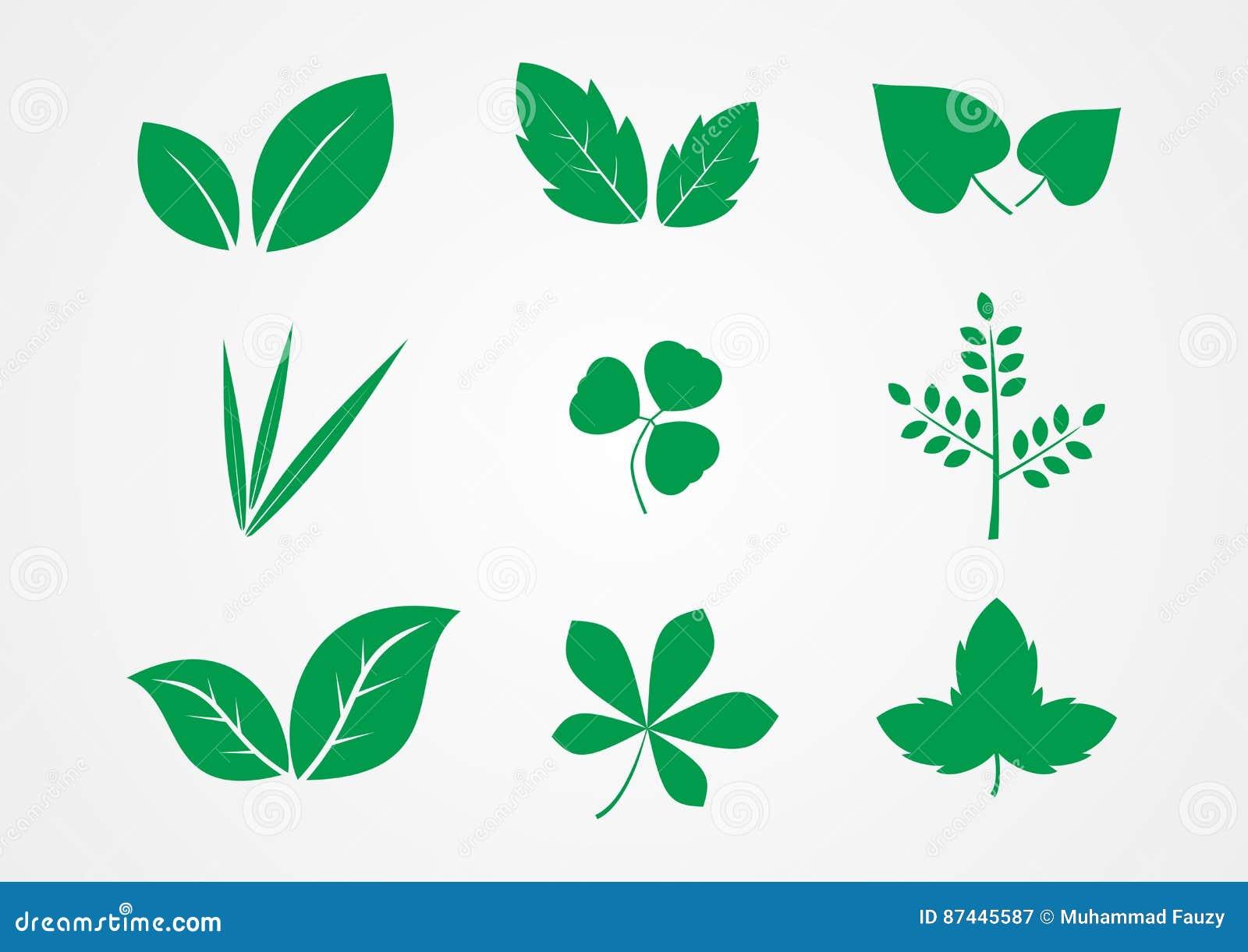 Vettore dell icona della pianta e della foglia