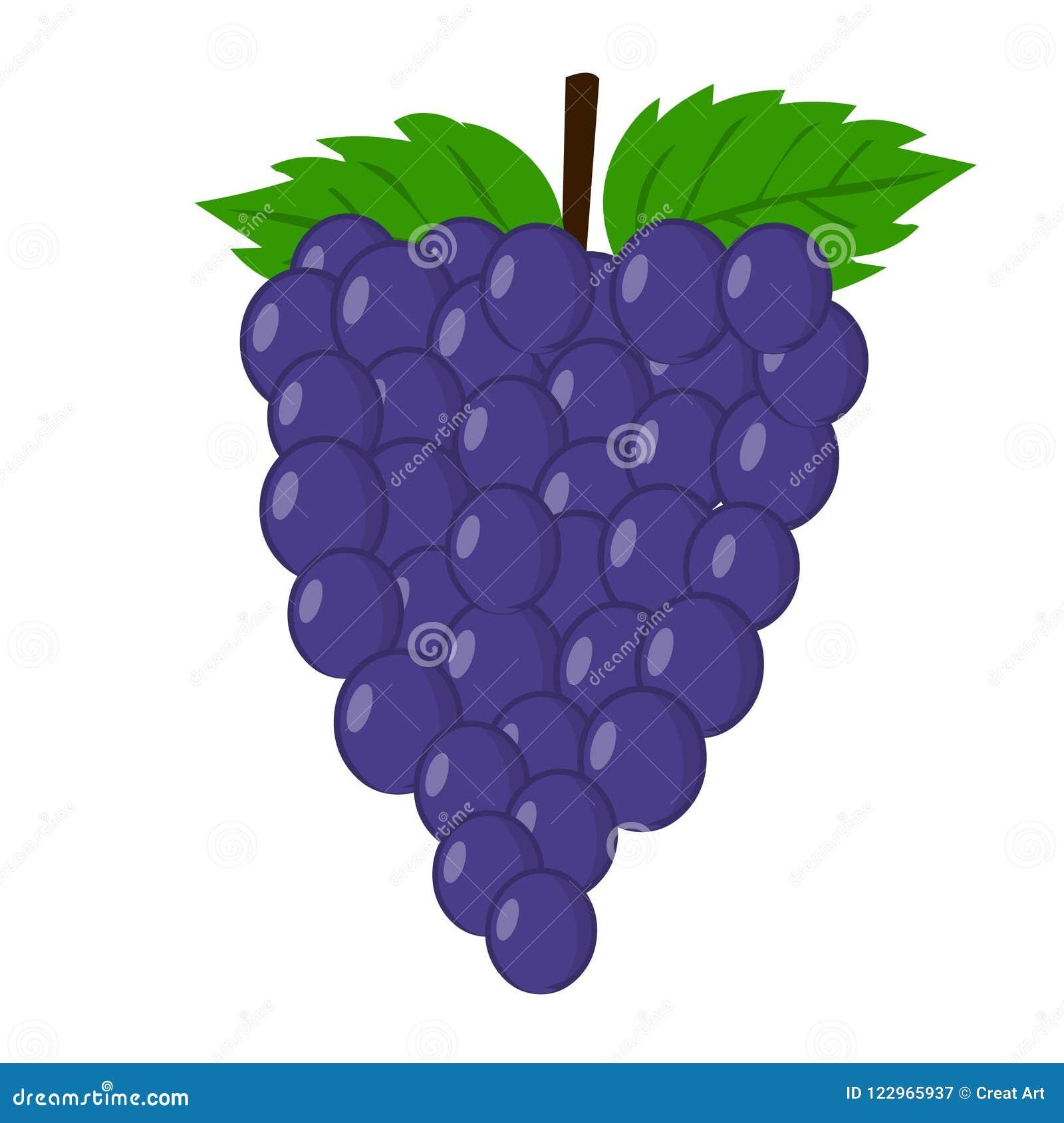 Vettore dell uva Illustrazione fresca dell uva