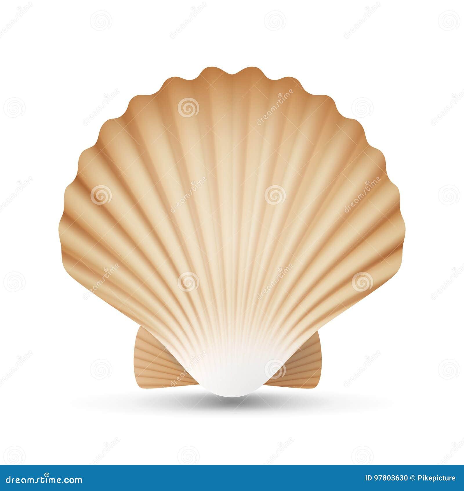 Vettore della conchiglia del pettine Mare realistico Shell Close Up Isolato su bianco Illustrazione