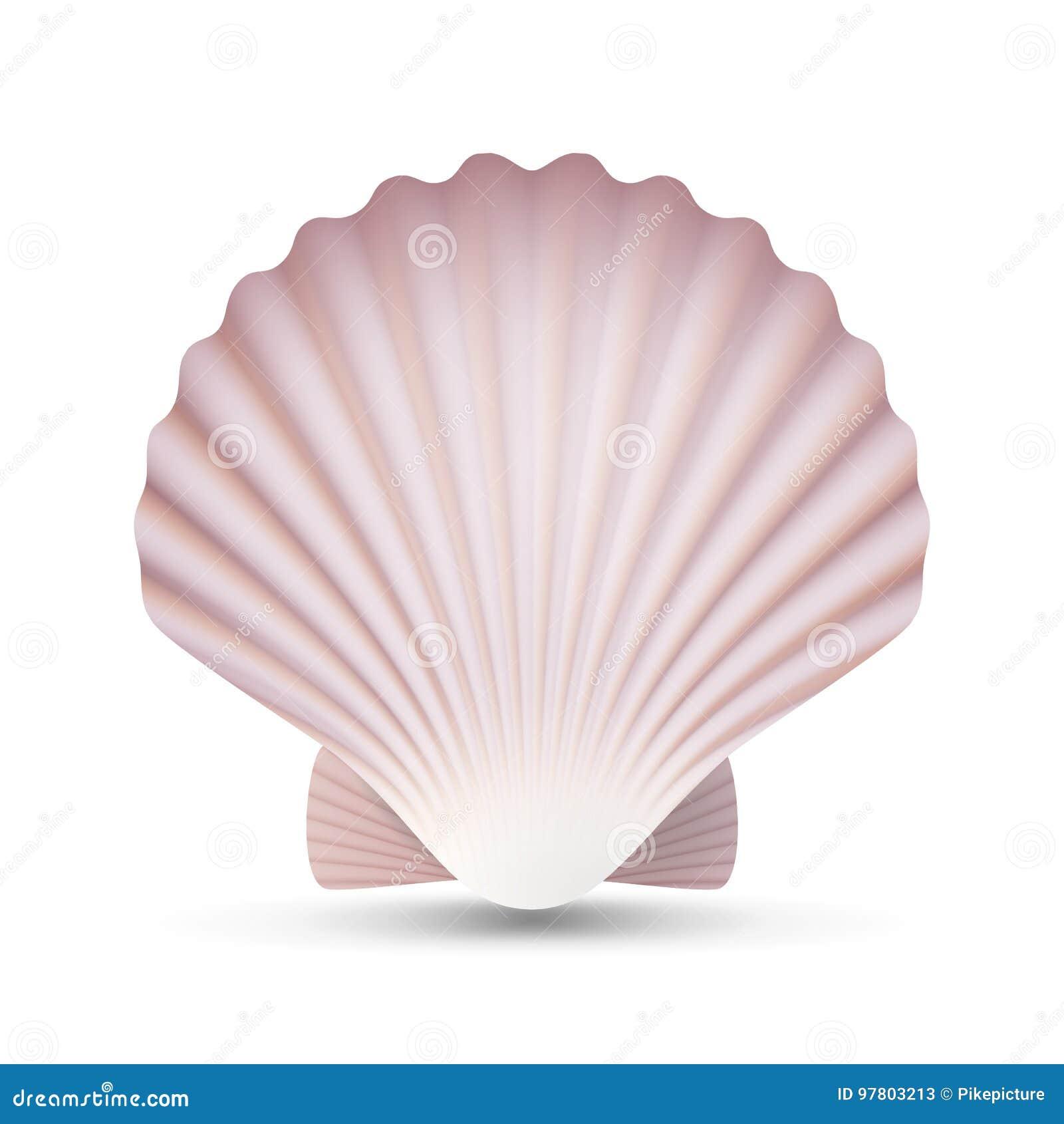 Vettore della conchiglia del pettine Mare Shell Close Up del mollusco dell oceano Isolato Illustrazione