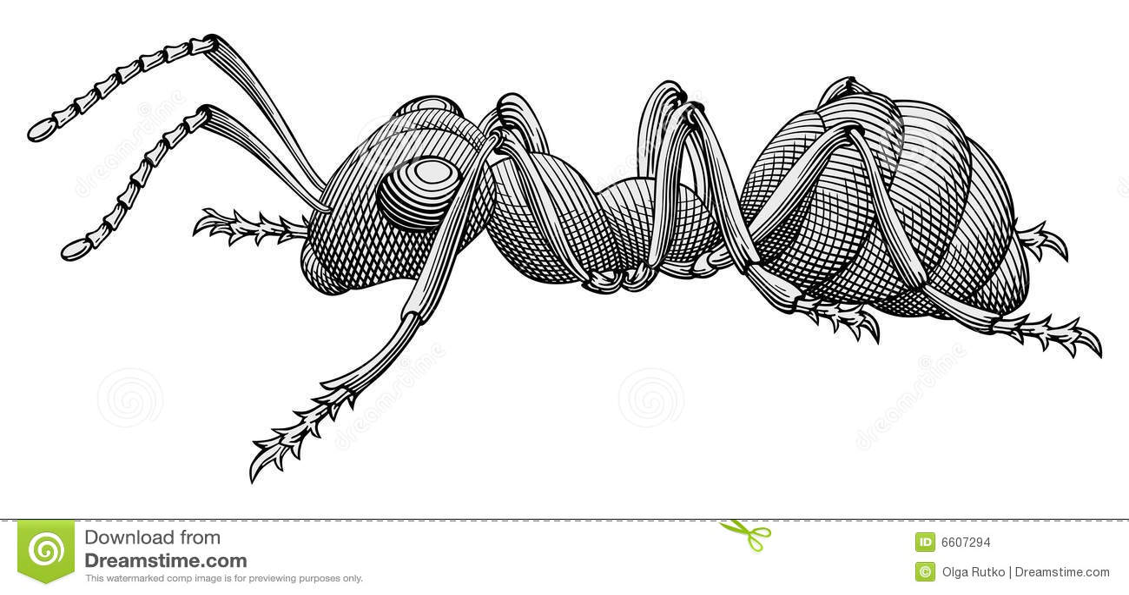 Vettore della formica