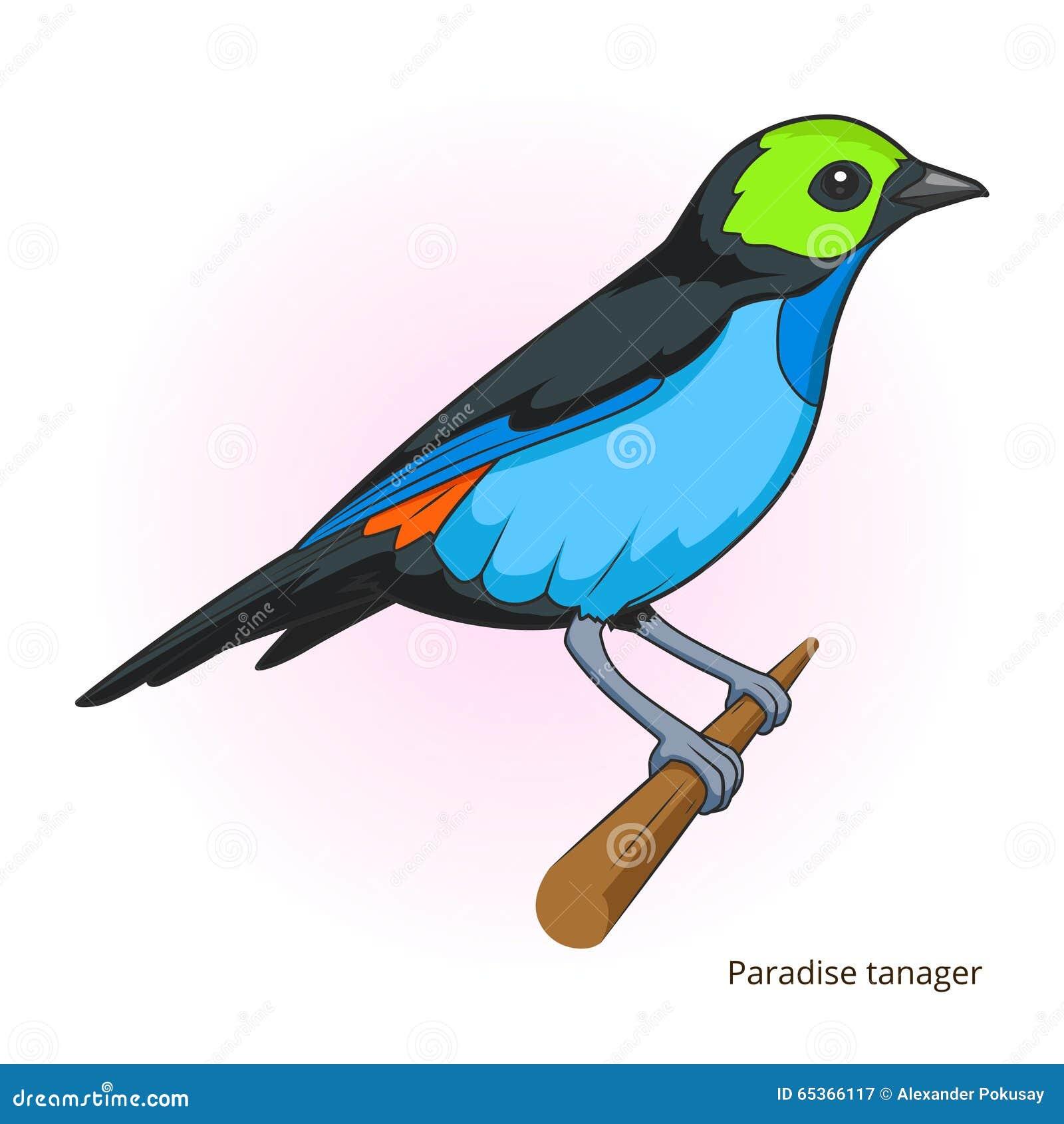 Vettore educativo del gioco dell uccello del tanager di paradiso
