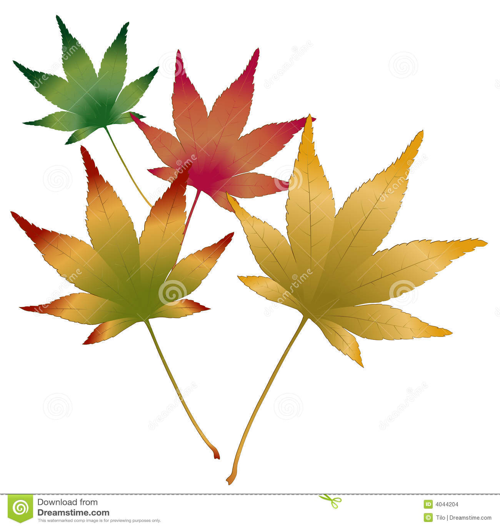 Vettore giapponese delle foglie di acero illustrazione for Foglia acero