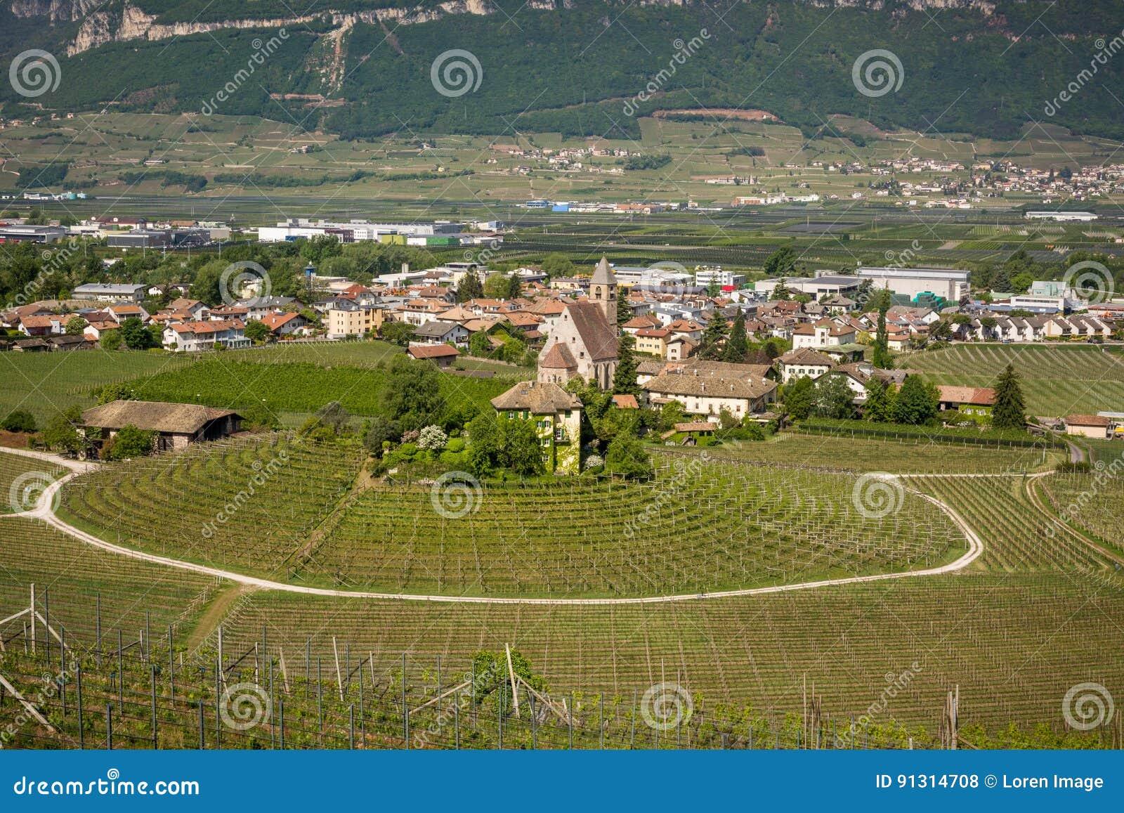 Viñedo circular característico en el Tyrol del sur, Egna, Bolzano, Italia en el camino del vino
