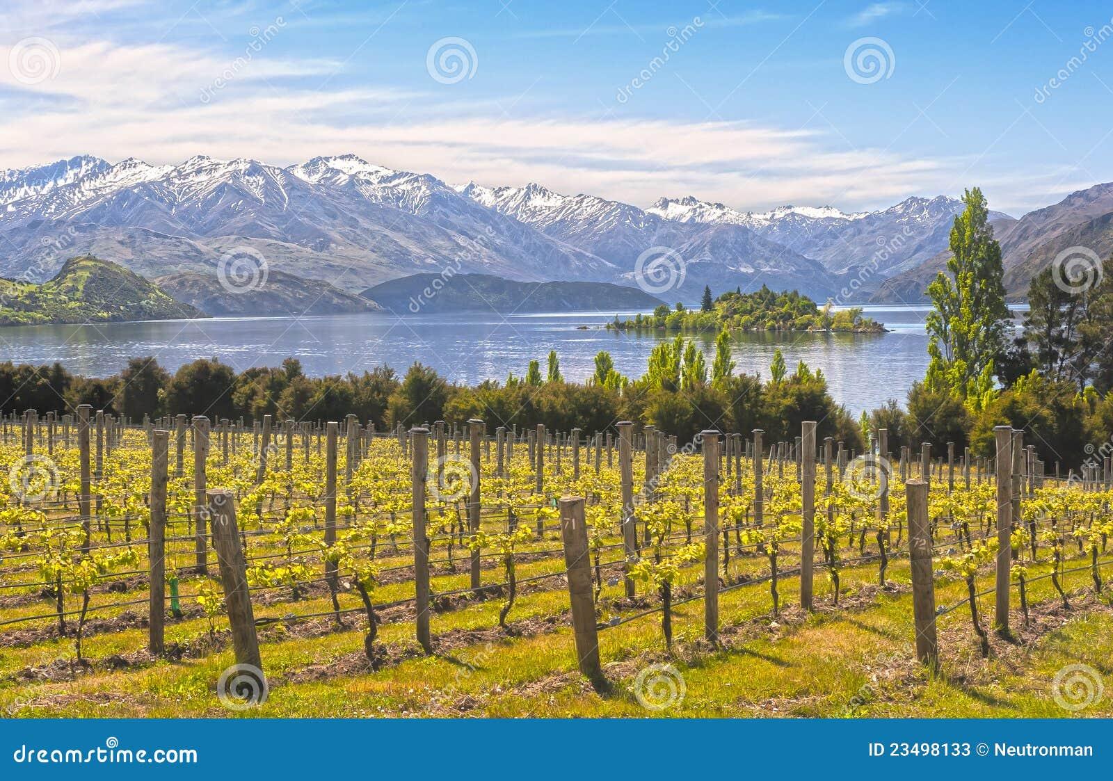 Viñedo en el lago - Nueva Zelandia