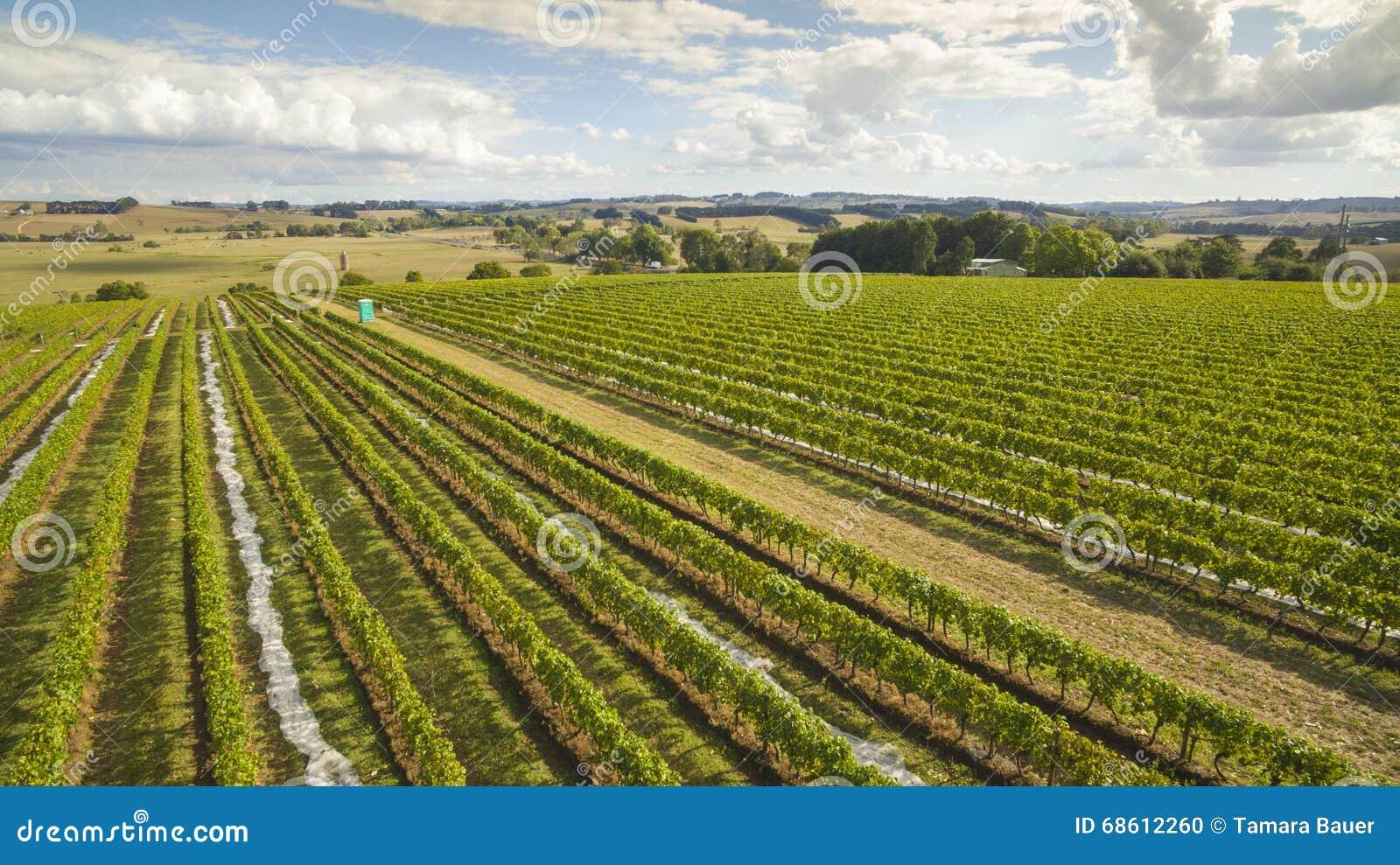 Viñedo y tierras de labrantío escénicos, Australia