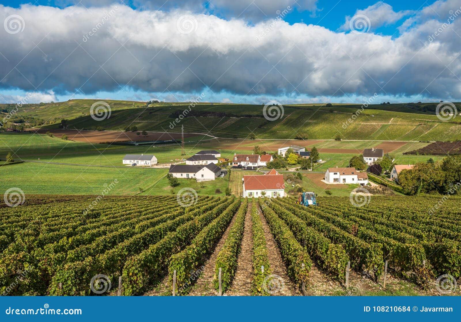 Viñedos Del Valle Del Loira Francia Foto De Archivo Imagen De Paisaje Uvas 108210684