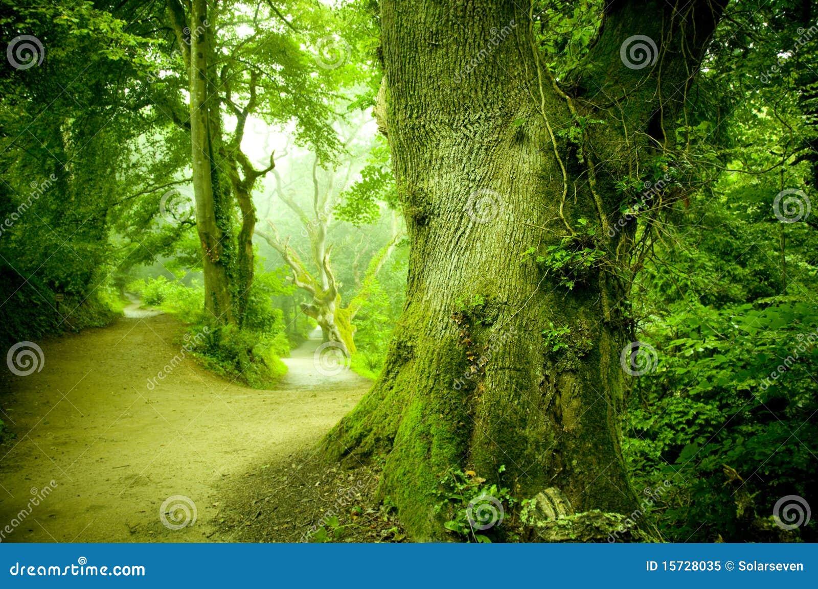 Via della foresta