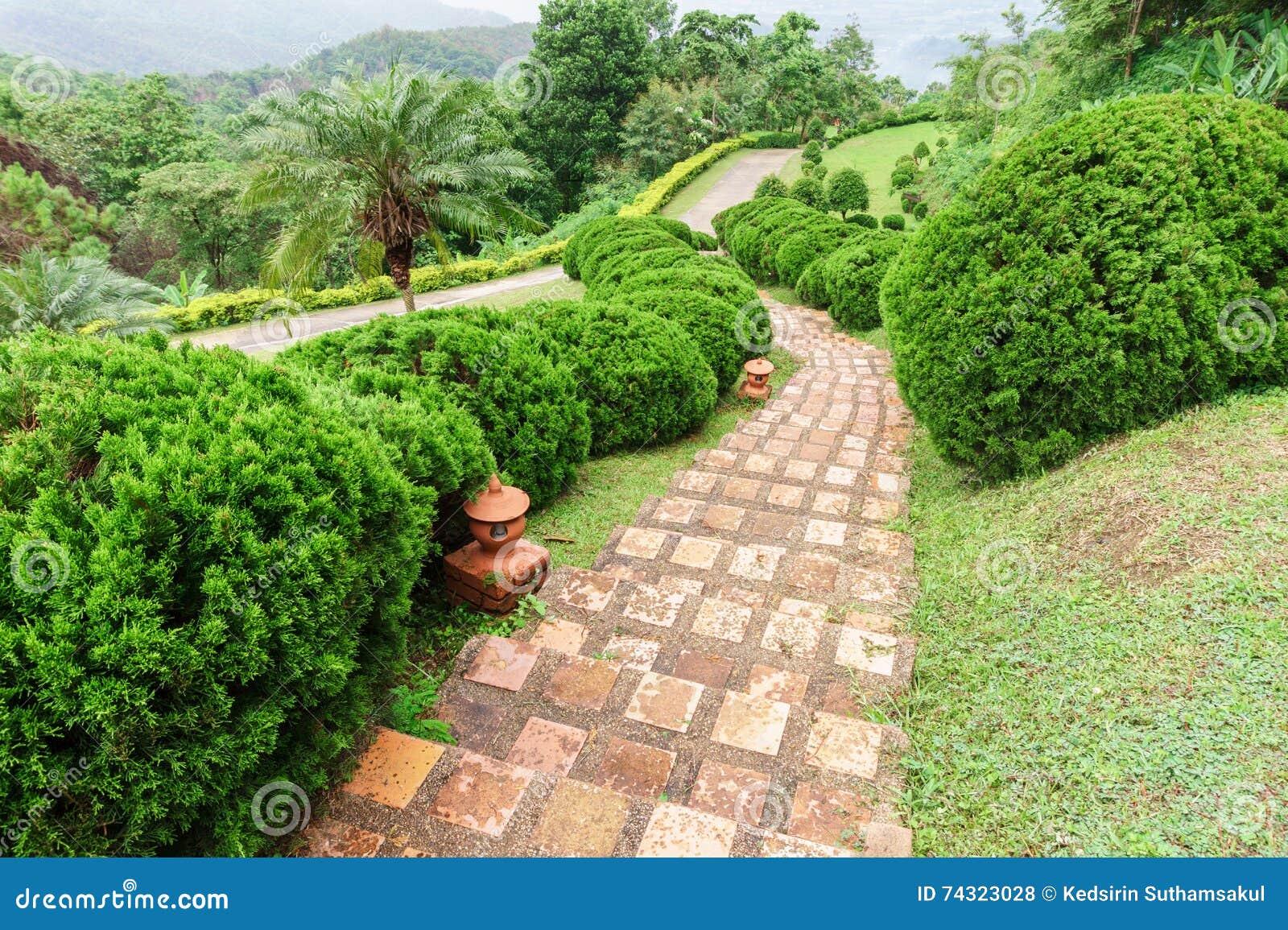 Alberi Ornamentali Da Giardino via fra il prato inglese della pianta con gli alberi